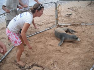 Hawaiian monk seal and marine debris