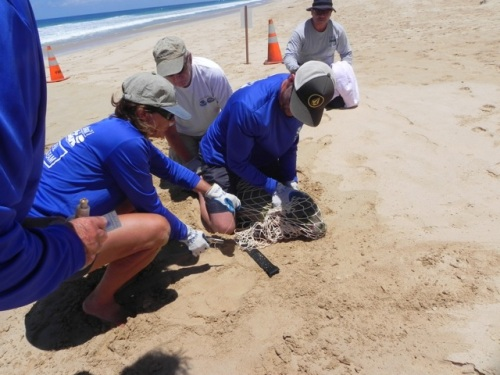 removing hook from hawaiian monk seal's mouth