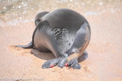 Monk Seal Pup RJ22-2