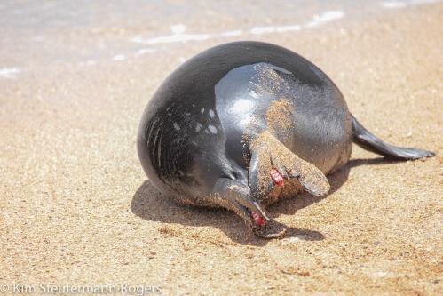 Monk Seal Pup RJ22-6