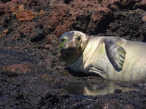 hooked-seal-image000001-2.jpg